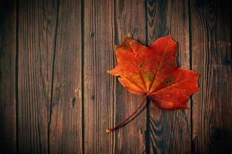 photo  autumn fall leaf stocksnapio