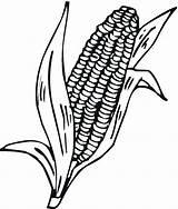 Corn Cob Coloring Stalk Stalks Drawing Printable Pages Clipart Indian Cartoon Ear Plant Cliparts Clip Colorir Freecoloringpagefun Artesanato Getdrawings Clipartmag sketch template