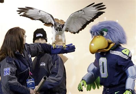 seahawks blitz   real seahawk bird   game