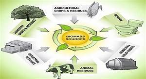 1 Most Probable Sources Of Biomass  From
