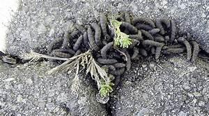 Kleine Schwarze Würmer : igitt was ist das bzforum ~ Lizthompson.info Haus und Dekorationen