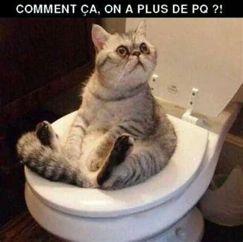 image drole chat chats cats les toilettes savez vous et besoin