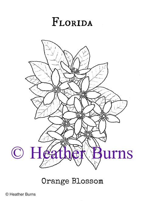 Orange Blossom Coloring Pages Coloring Pages