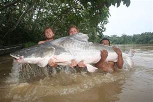 World's Biggest Catfish Ever Caught