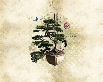 Bonsai Wallpapers Japan Japanese Pantalla Fondos Tree