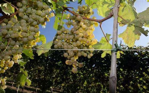 vin pour cuisiner apprendre à cuisiner au raisin et vin de jurançon la