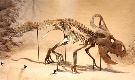 Dave Hone's Archosaur Musings