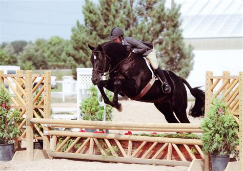 horse talent american quarter america jumping