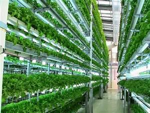 Urban Gardening Definition : all about vertical farming modern agriculture ~ Eleganceandgraceweddings.com Haus und Dekorationen