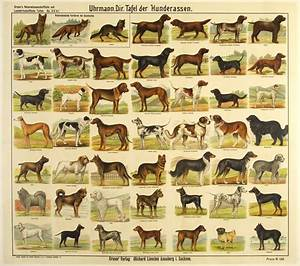 Dog Breeds – Poster Museum