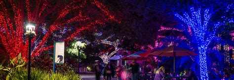 hewan lucu 2016 when does zoo lights end images