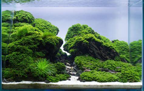 aquascape straight edge  frederic fuss germany