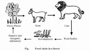 25 Elegant Food Chain Diagram With Explanation
