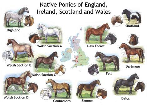 breeds pony native horse ponies welsh british bendy horses shetland should exmoor dartmoor characteristics england clubs connemara poster dog syllabus