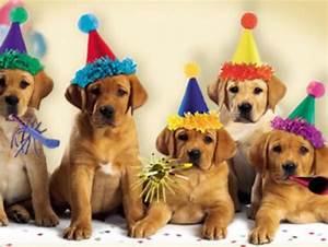 Image Gallery happy birthday cute puppy