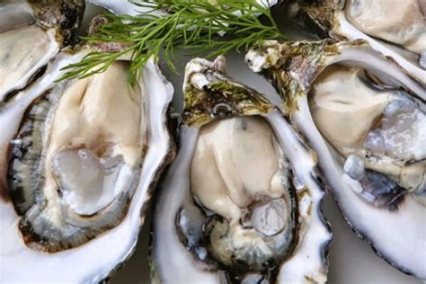 biological vietnam seafoods oysters mussels green
