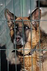 Schronisko dla psów kielce