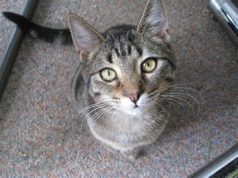 bill    modernizing animal protections act