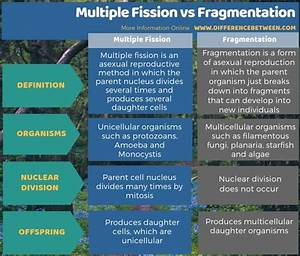 Difference Between Multiple Fission And Fragmentation