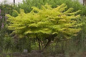 Arbre à Croissance Rapide Pour Ombre : fertilisation des arbres arbustes et vivaces espace ~ Premium-room.com Idées de Décoration