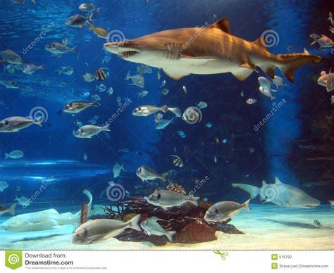 requin dans l aquarium photo stock image 519790