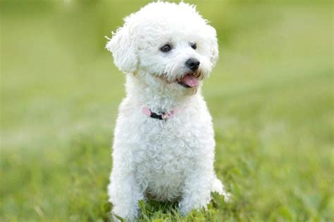 Toy Breeds Of Dogs In India Apartments For 55 And Over In Nj Park View Village Porterville Ca No Fee Nyc Meaning Studio Tyler Tx All Bills Paid 1 Bedroom Seville Hotel Fort Lauderdale Apartment Locators Houston Broken Lease 3 Northwest Dc