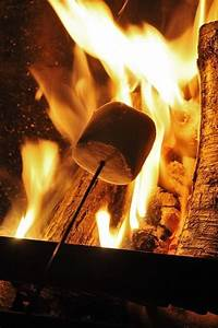 roasting marshmallows pictures photos and images for