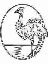 Emu Coloring Pages Printable Birds Recommended Bright 1000 Mycoloring sketch template