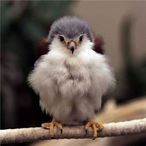 Unusual, cute baby animals - Imgur | Animals Everyone ...