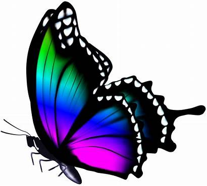 Butterfly Clip Colorful Purple Tattoo Butterflies Painting
