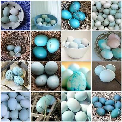 Bird Egg Eggs Candy Duck Pa Shape