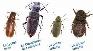 Insecte Qui Mange Le Bois : les insectes mangeurs de bois dans le sud finist re ~ Farleysfitness.com Idées de Décoration