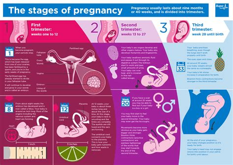 The Gallery For Breasts During Early Pregnancy Pictures