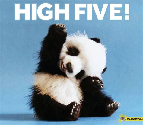 high  panda starecatcom