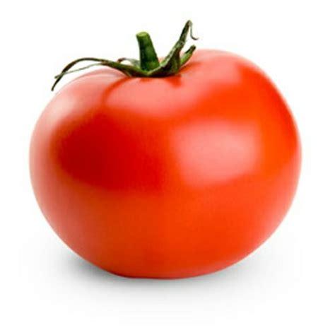 terkeren 23 sketsa bunga tomat