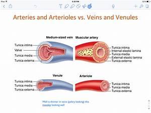 11-cardiovascular System