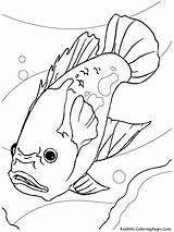 Coloring Pages Aquarium Fish Oscar Printable Catfish Drawing Gambar Ikan Freshwater Mewarnai Sheet Sheets Akuarium Colouring Tropical Realistic Drawings Fishing sketch template