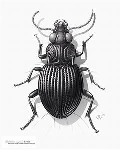Insects Pencil Drawing At Getdrawings