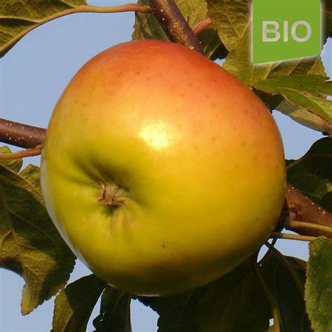Miete Für Den Herz Apfel Garten Für 3 Bio Apfel Maschanzker Der Herzapfelhof Im Alten Land