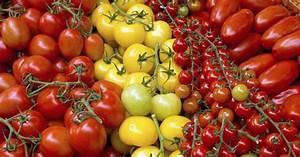 Tomaten Krankheiten Bilder : tomaten tipps f r eine reiche ernte mein sch ner garten ~ Frokenaadalensverden.com Haus und Dekorationen