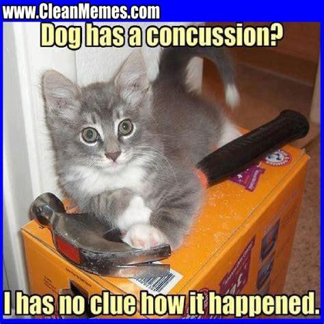 Dog Cat Meme - dog memes clean image memes at relatably com