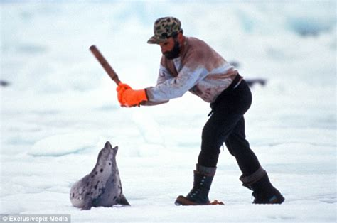 canadian governments seal hunt