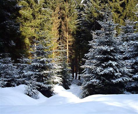 tannenbaum im topf kaufen tannenbaum im topf kaufen schweiz frohe weihnachten in europa