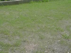 Acheter Gazon A Semer : rouleaux de pelouse trouvez le meilleur prix sur voir ~ Premium-room.com Idées de Décoration