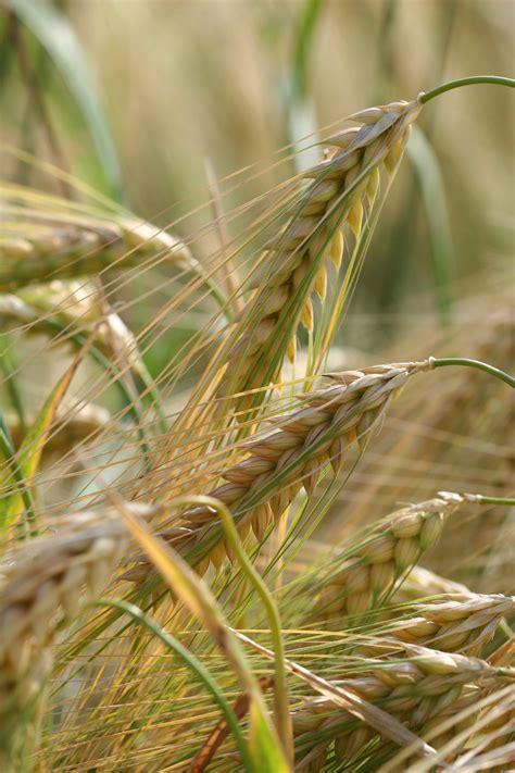 oats  sleep  oats  rise food   blog