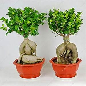 Ficus Ginseng Kaufen : tische von svi g nstig online kaufen bei m bel garten ~ Sanjose-hotels-ca.com Haus und Dekorationen