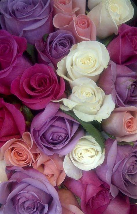 comment choisir une cuisine la signification des roses quelle couleur de roses offrir