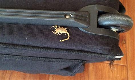 pest control  scorpions lawnstarter