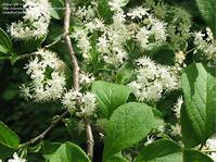full shade shrubs Northeast Gardening: Need Ideas for Full-shade Flowering ...
