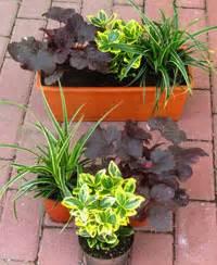 Winterharte Pflanzen Für Balkonkästen : pflanzen set f r 40 cm balkonk sten fr hling balkonpflanzen winterharte balkonpflanzen ~ Orissabook.com Haus und Dekorationen